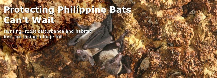 How to attract bats How to attract bats, Hardscape, Bat