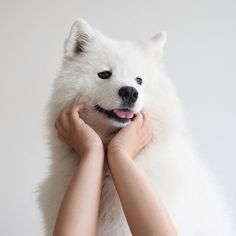 Image Result For White Puppy Tumblr Aesthetic Dog Tumblr Cute Animals Cute Creatures