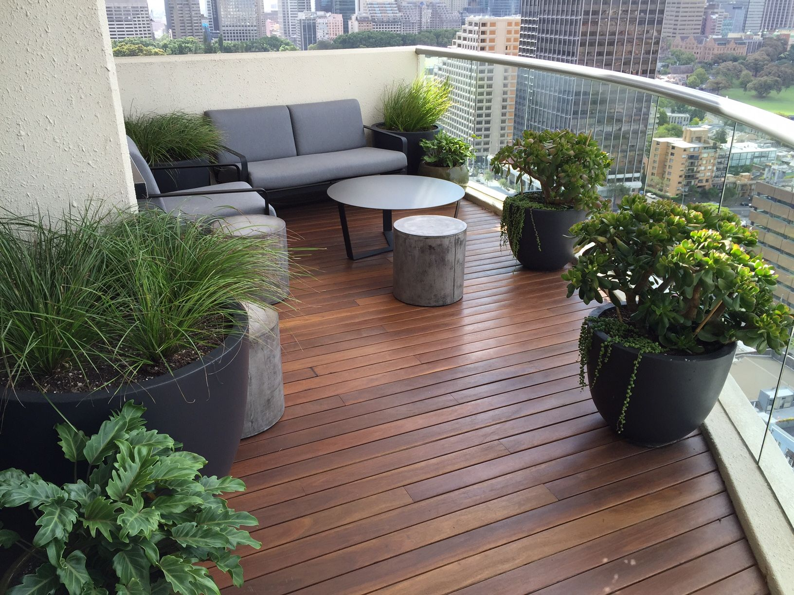 This stunning balcony garden design in Darlinghurst was recently completed  by our team of garden designers. Doesn't the Jade look stunning  underplanted with