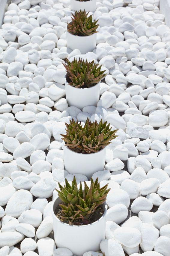 contraste de piedras blancas + plantas cactus/agave en macetas