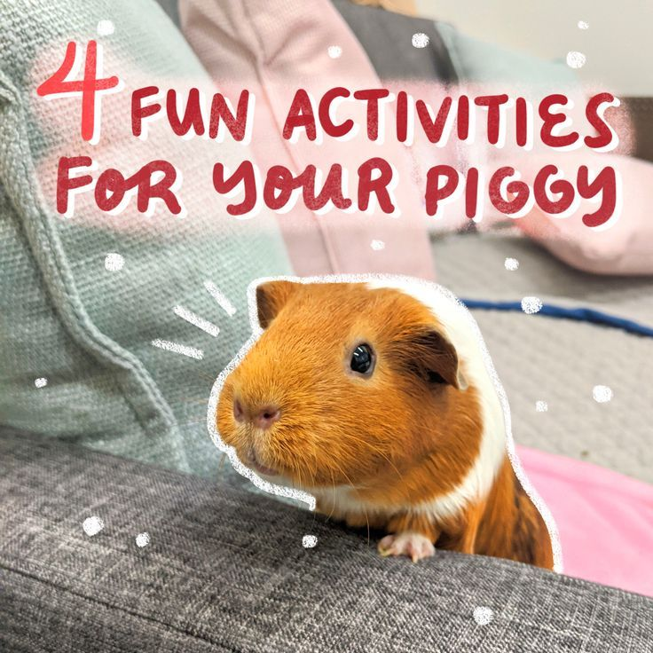 Pin On Piggies