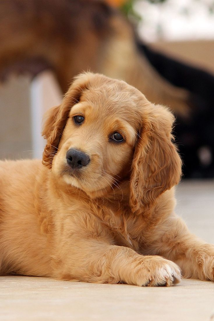 A Cute Puppy Is Sitting On The Floor Cute Puppy Dog Cuteanimals Theworldisgreat Weaning Puppies Feeding Puppy Cute Puppies