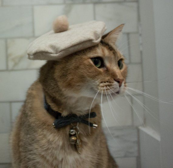 Beige Beret Hat For Your Cat Free Shipping Cats Cute Cats Cute