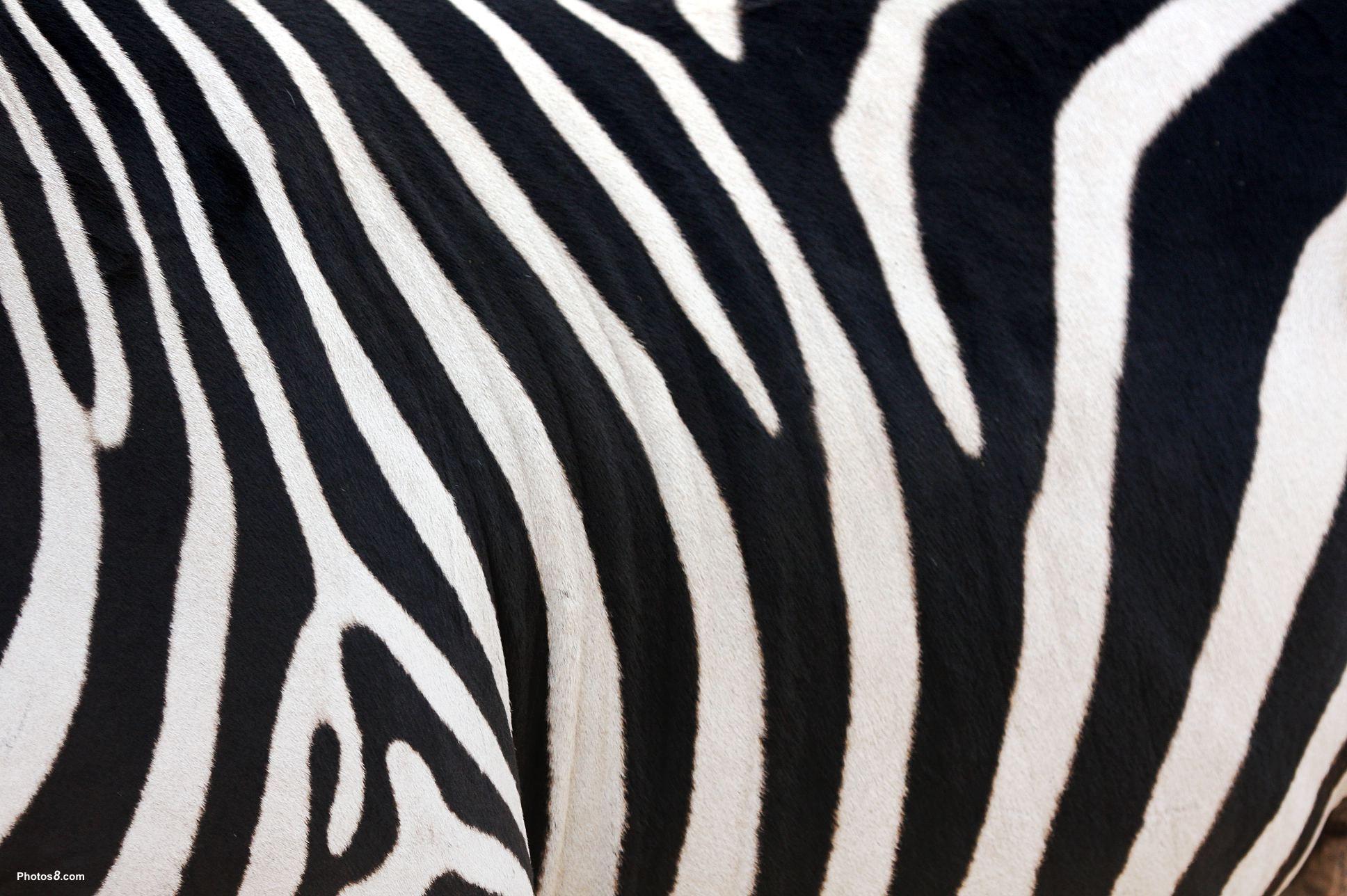 Zebra Drawing Computer Wallpapers Desktop Backgrounds 1920 1080 Zebra Desktop Wallpapers 41 Wallpapers Adorable Wal Zebra Wallpaper Zebras Zebra Drawing