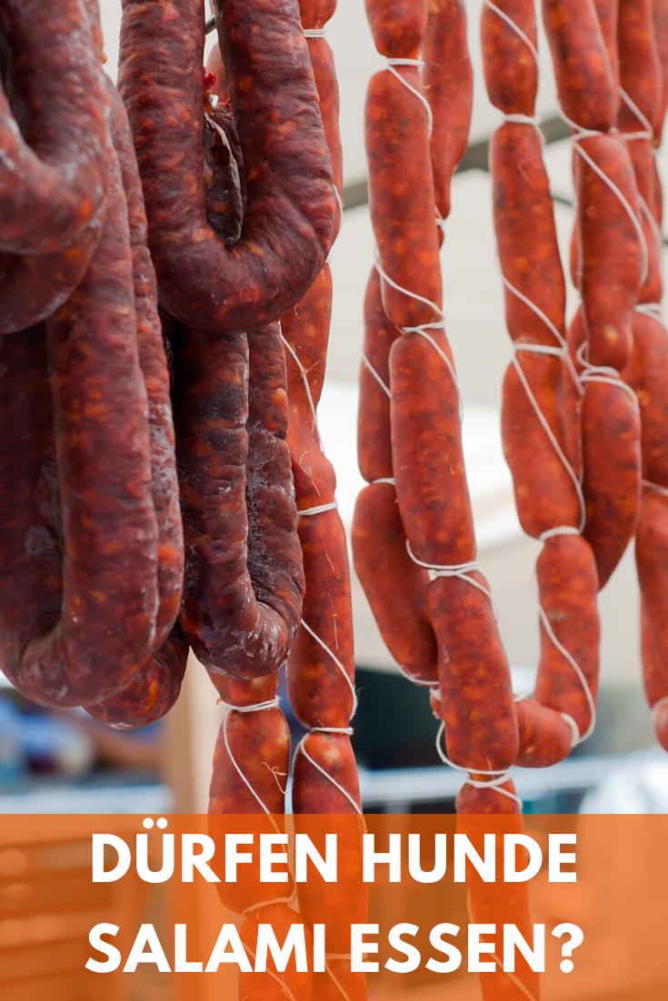 Durfen Hunde Salami Essen Und Wann Giftig Oder Schadlich In 2020 Essen Pizza Belegen Schonkost