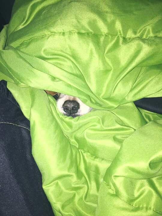 Flopy con frío!!