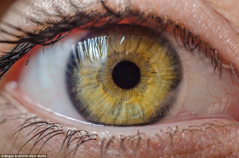 Incredible Photographs Reveal Stunning Unique Quirks Of Our Eyes