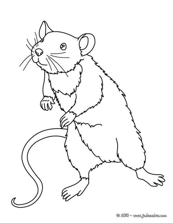Coloriage d une petite souris debout et r aliste un coloriage sur le th me de la nature - Imprimer coloriage petite souris ...