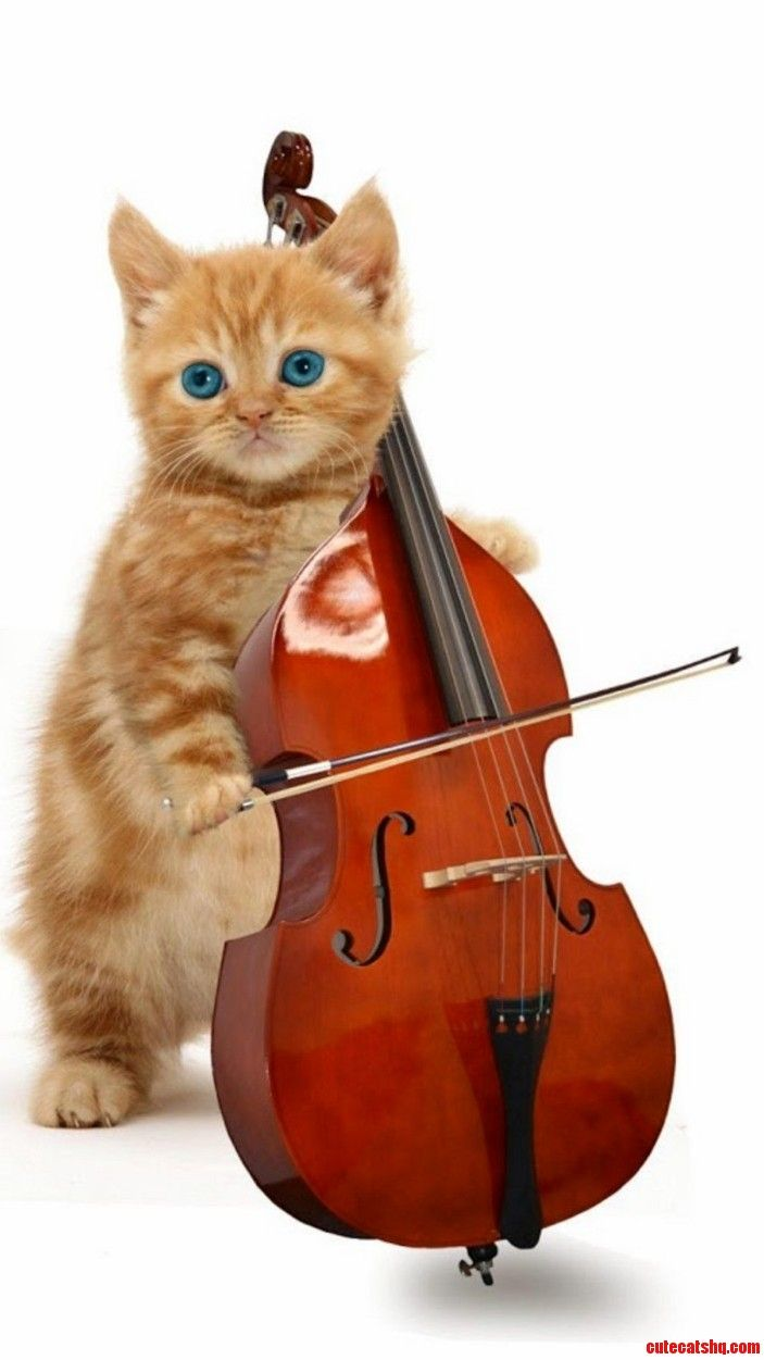 Cat Music On The Musical Instruments Cute Cats Hq Pictures Of Cute Cats And Kittens Free Pictures Of Funny Cats And Photo Of Cute Kittens Dancing Cat Cute Cats