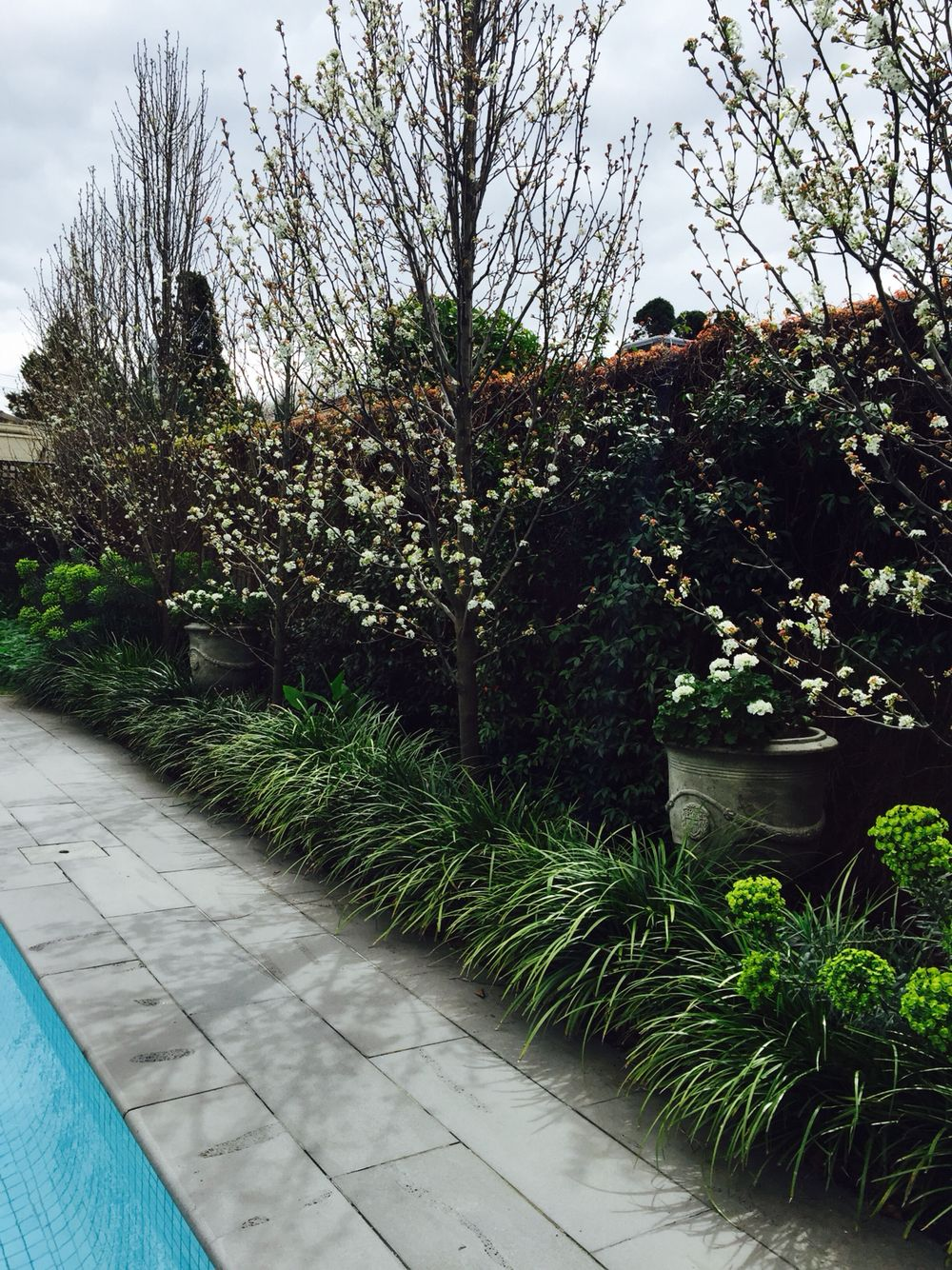 Garden landscape trees  Poolside  with Liriope Border and Pear Trees White Garden  Nadia
