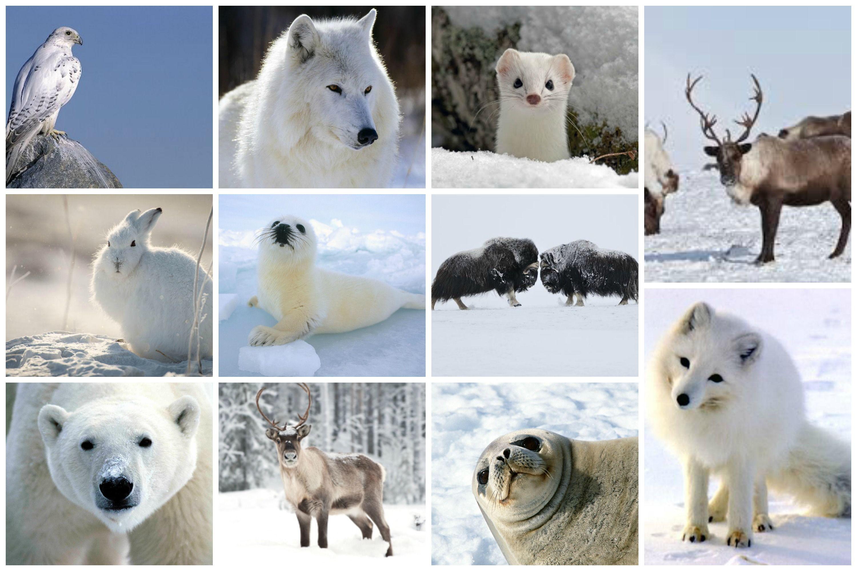 Красивые картинки на аву животные с детенышами