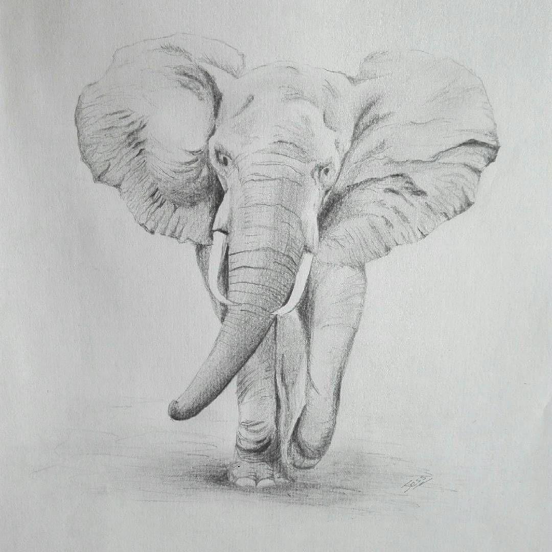 слоники рисунок карандашом указанных параметрах съемки