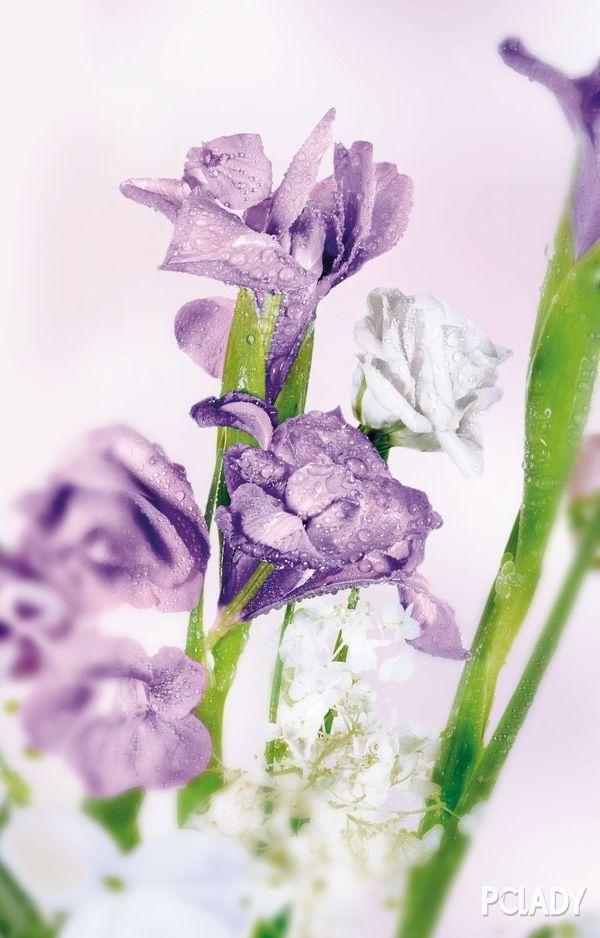 寶格麗Omnia系列寶石香氛 獻給初夏的萬千風情 - 每日頭條