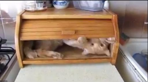 Cat In A Bread Box Cute Video Of This Cat Hiding In A Bread Box  Cute Tender Andor