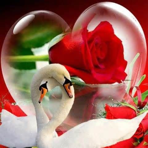 beautiful wallpapers of hearts and roses I love you - Yahoo Canada Image Search Results