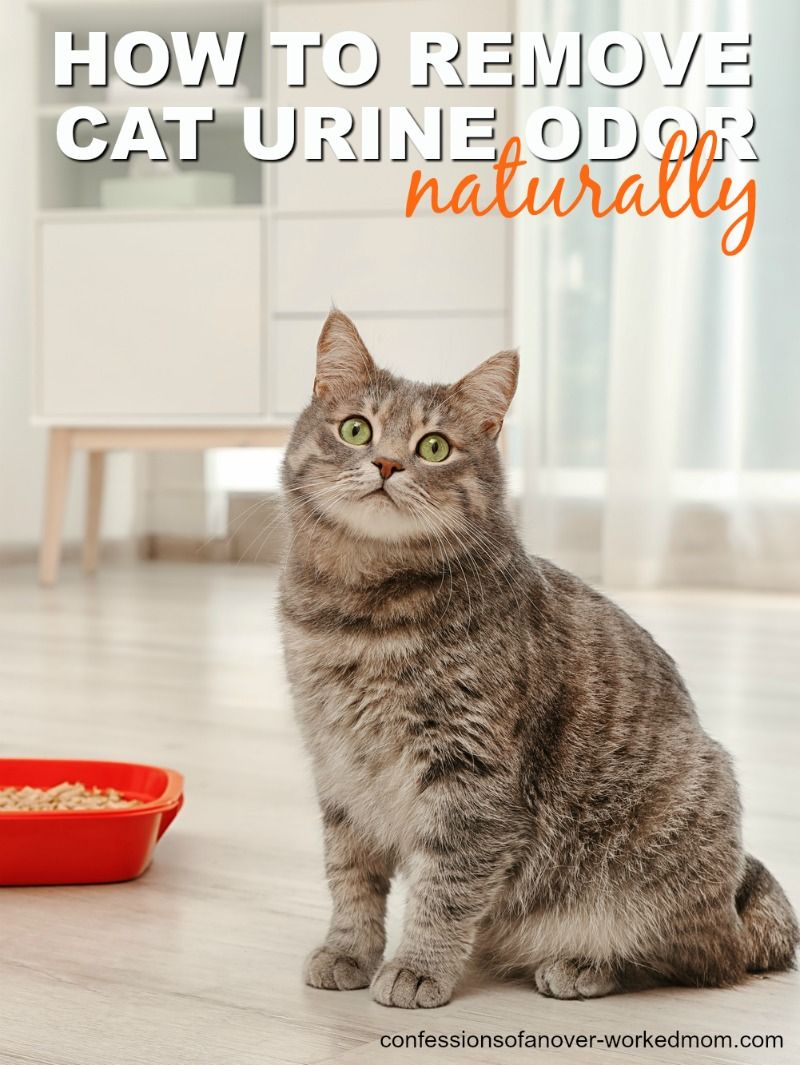 Removing Cat Odors From The House