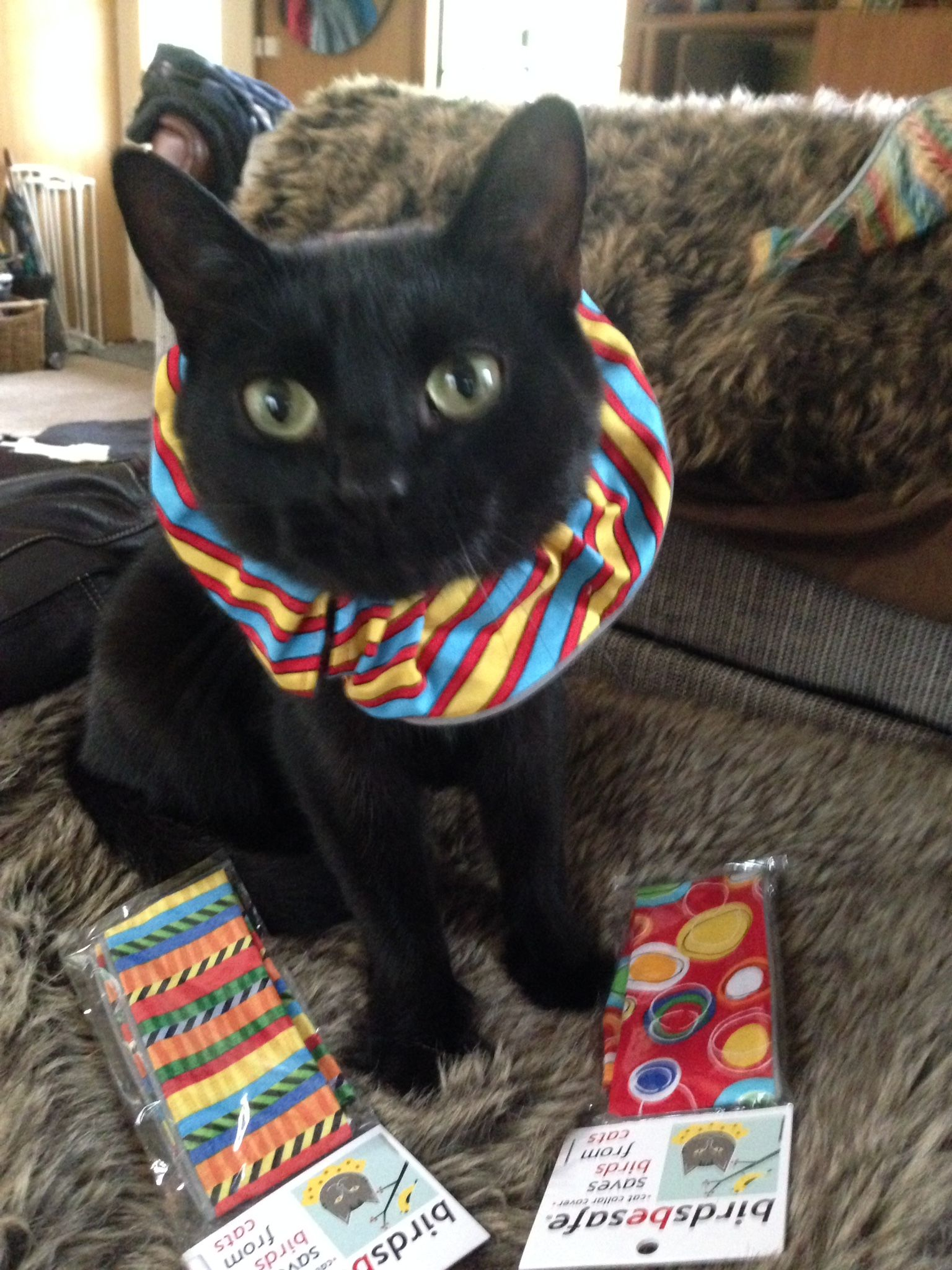 What To Wear What To Wear All This New Zealand Cat S Choices Are Bright And Birdsbesafe Brand Keeping Birds Safe Cats Cat Collars Fur Babies