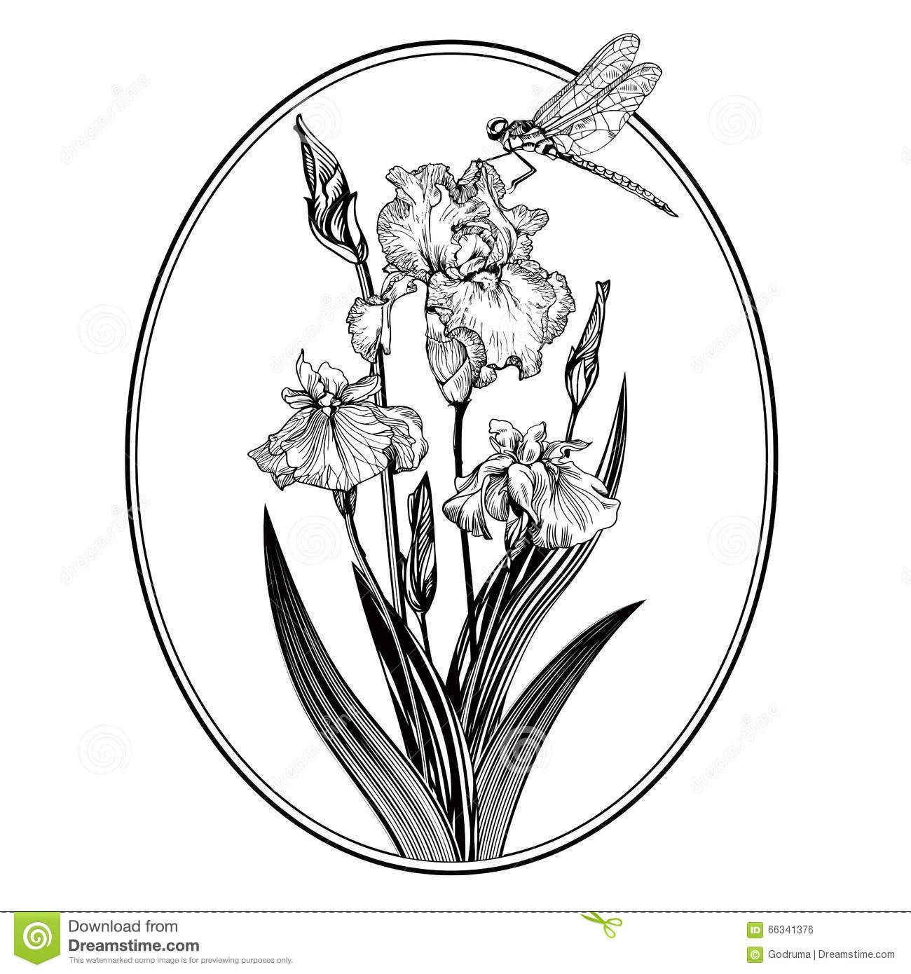 Vintage Elegant Flowers Black And White Vector Illustration Iris Flower Botany Download From Over 50 Millio Iris Flowers Elegant Flowers Gladiolus Flower