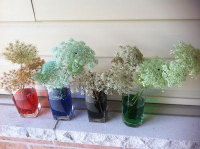 Rockabye Butterfly: Queen Anne's Lace Experiment
