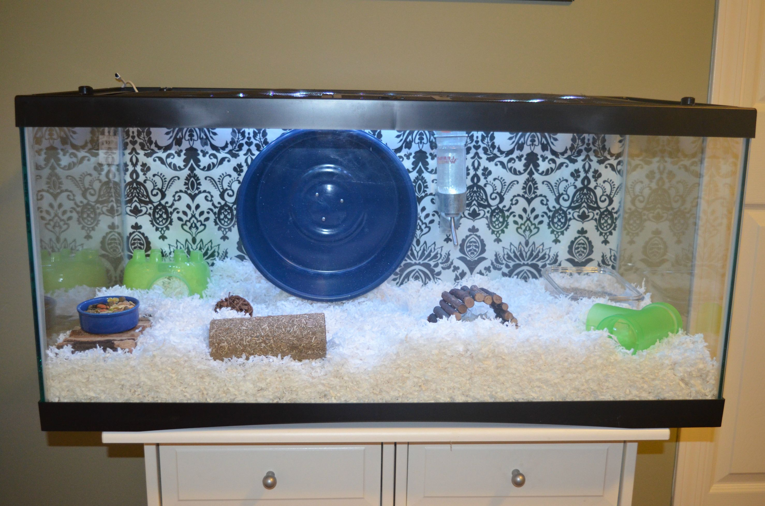 40 Gallon Hamster Tank Not Mine Hamster Tank Hamster Habitat Cool Hamster Cages