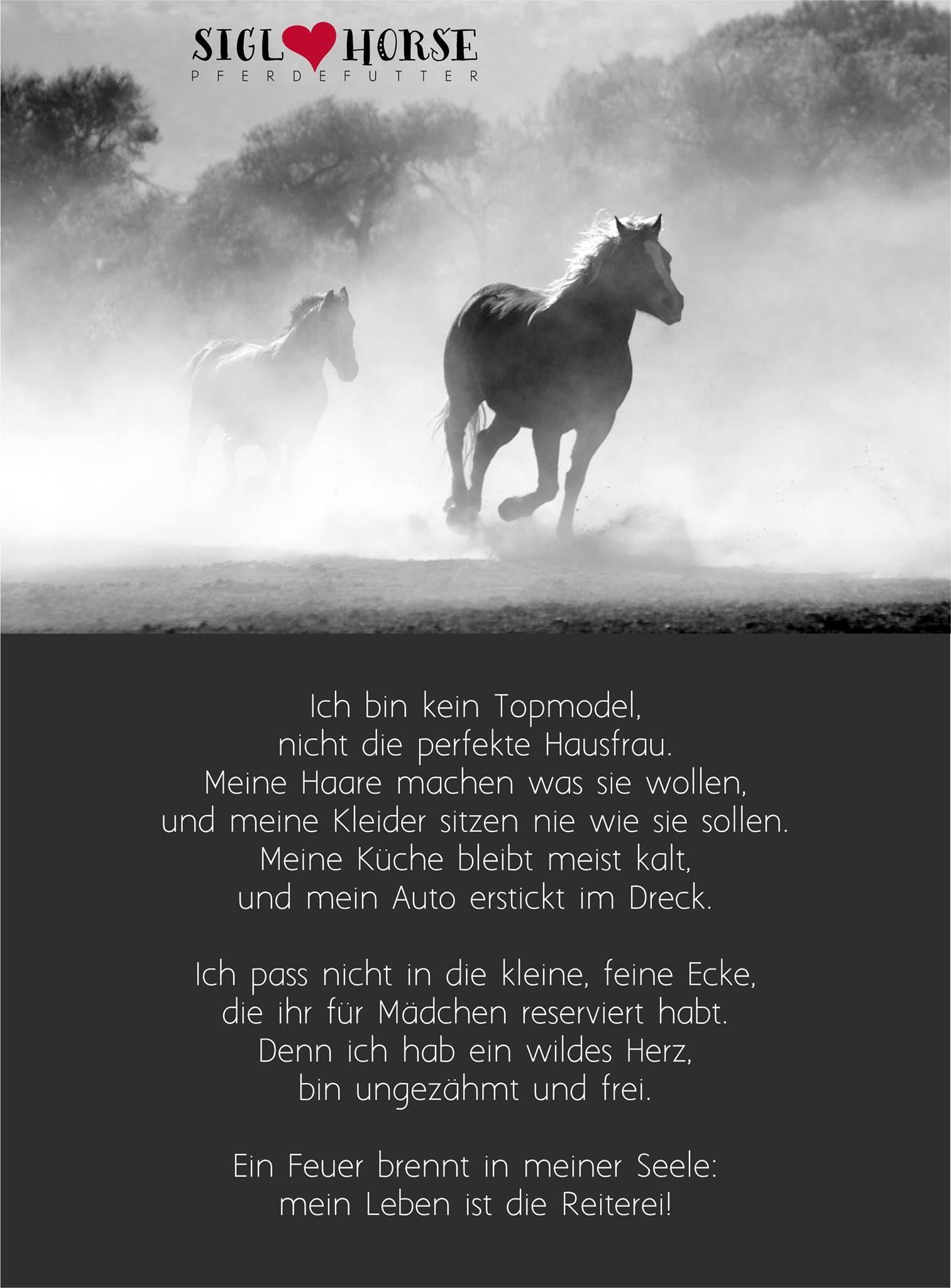 Ein Feuer Brennt In Meiner Seele Mein Leben Ist Die Reiterei Pferdemadchen Pferde Zitate Pferde Madchen Zitate Fur Reiter