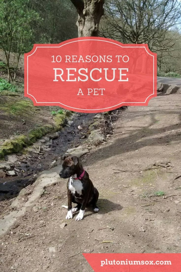 10 Reasons To Rescue A Pet Dog Training Pets Dogs