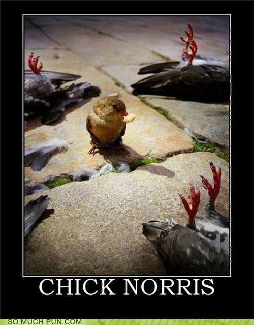 Chuck Norris extends beyond humans :D