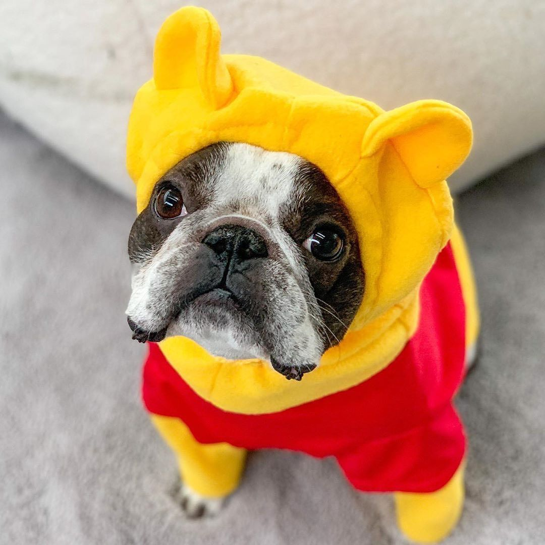 10 5k Likes 154 Comments Disney Pets Disneypets On Instagram If You Re Guilty Of Ever Putting Your Pet In A Costume Raise In 2020 Pets Your Pet French Bulldog