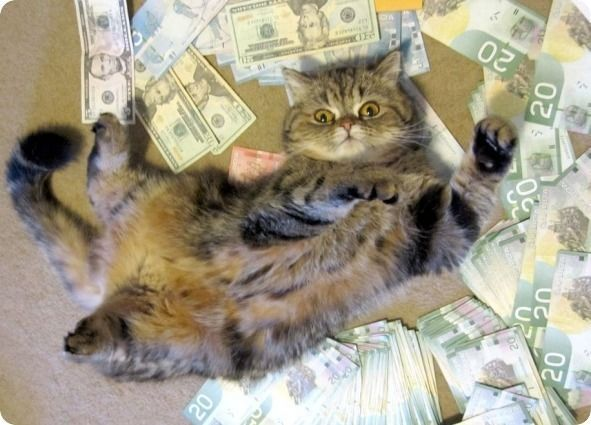I F$$$ing love money! (With images) | Cats, Cat roll, Cats tumblr