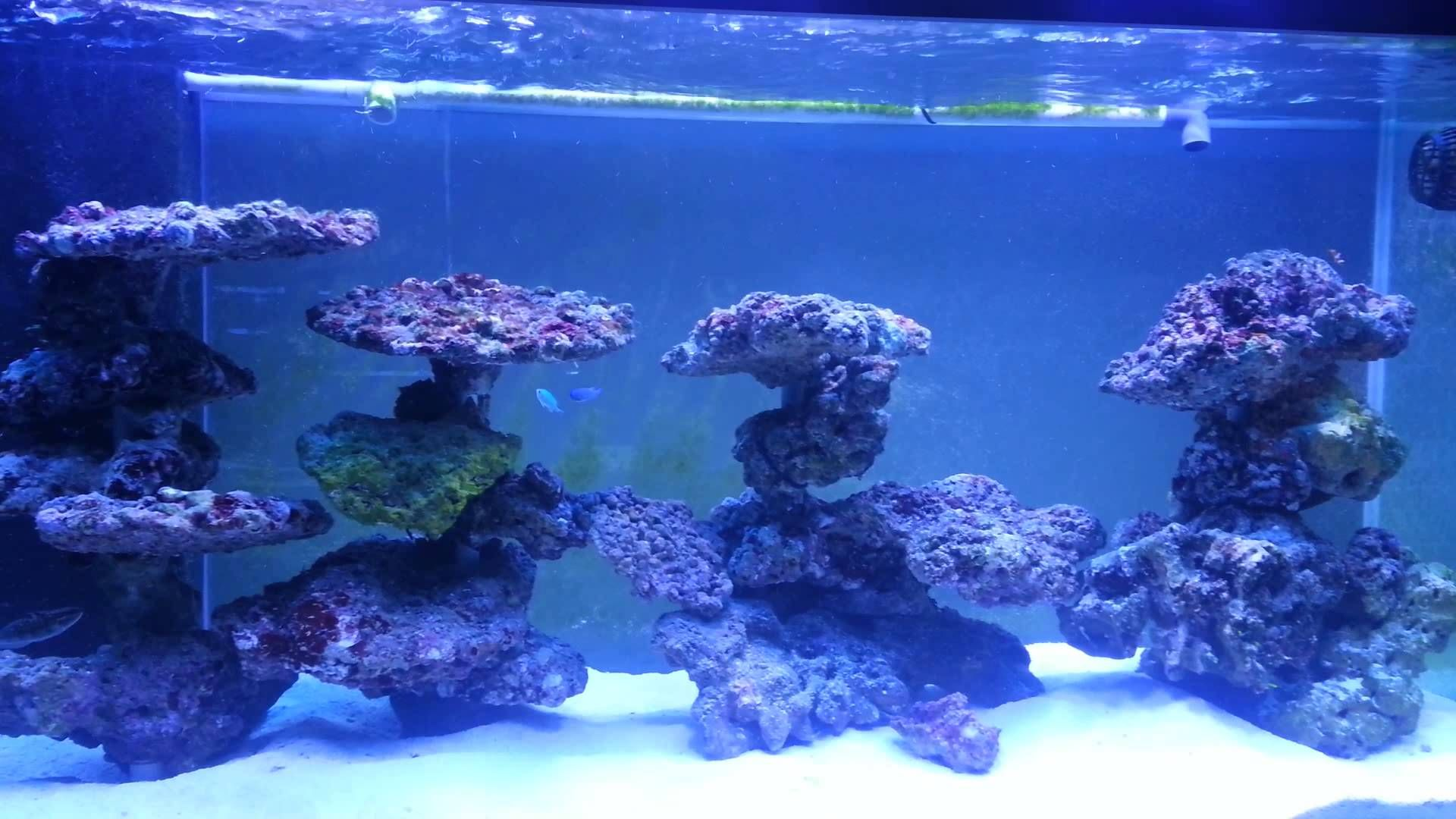 nano reef aquascapes - Google Search | Reef tank ...