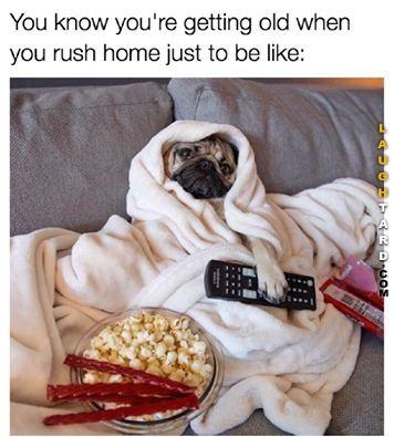 You Know Youre Old Pugs Funny Funny Dog Memes Cute Pugs