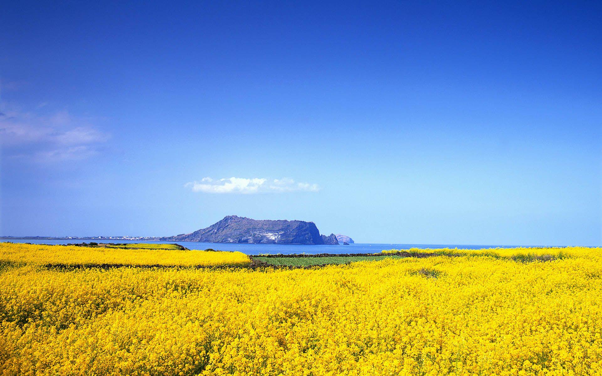 Jeju Island I D Love To Visit Korea One Day Jeju Island Nature Wallpaper South Korea Travel