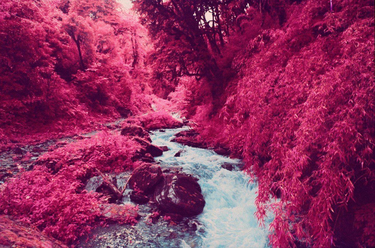 Картинки малиновый цвет в природе