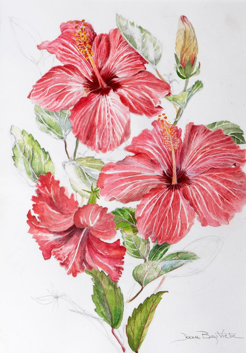 Pin by mila marques on flores pinterest hibiscus flowers and pin by mila marques on flores pinterest hibiscus flowers and sketchbooks izmirmasajfo