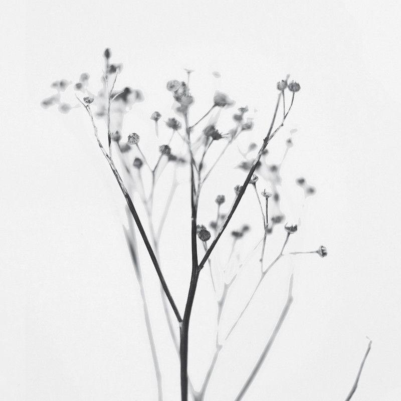 植物のたおやかな優しさに癒されます One Must Dash Yarrow アートプリントポスター 30x40cm モノクロ 北欧 スウェーデン イギリス 線画 女の子 モノクロ 画像 影の写真