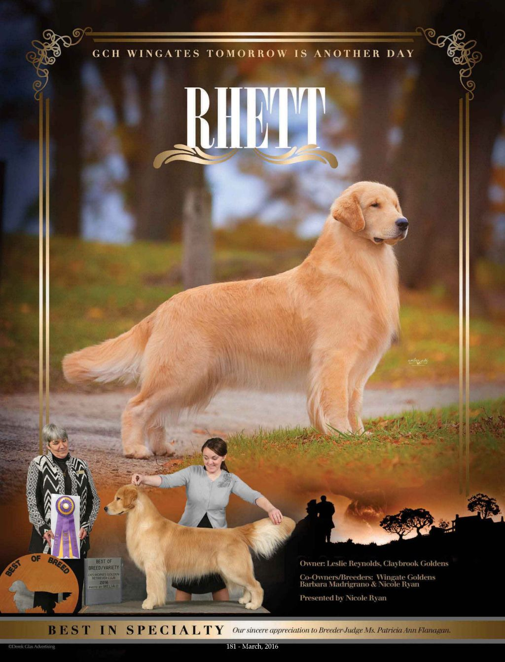 Gch Wingate S Tomorrow Is Another Day 7 2 2013 Golden Retriever