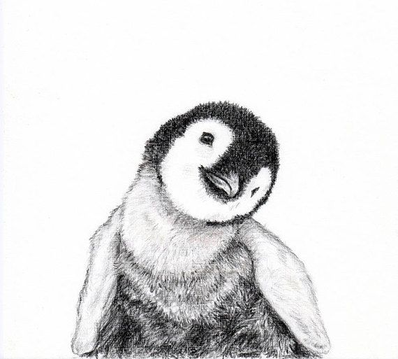 Baby Animal Print For Nursery Penguin In 2019 Baby Animal Drawings Pencil Drawings Of Animals Animal Sketches