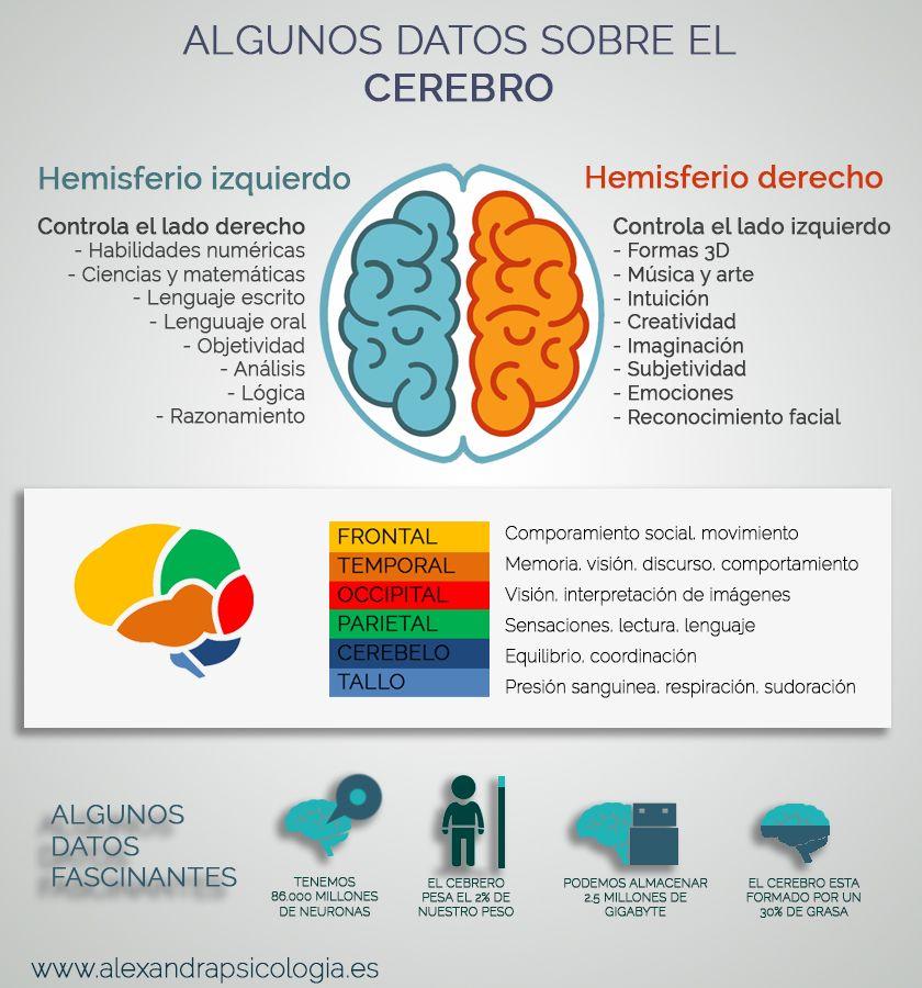 Algunos Datos Sobre El Cerebro Infografia Infographic