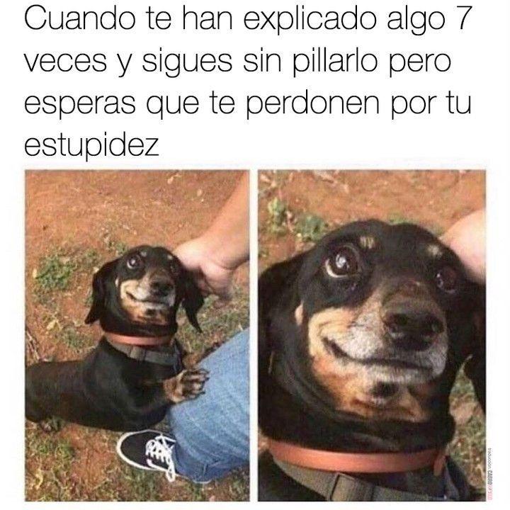Como Enviar Mensaje Whatsapp Sin Agregar Contacto Whatsappapp Whatsapp Memes Divertidos Sobre Perros Memes Divertidos Chistes Graciosos De Animales