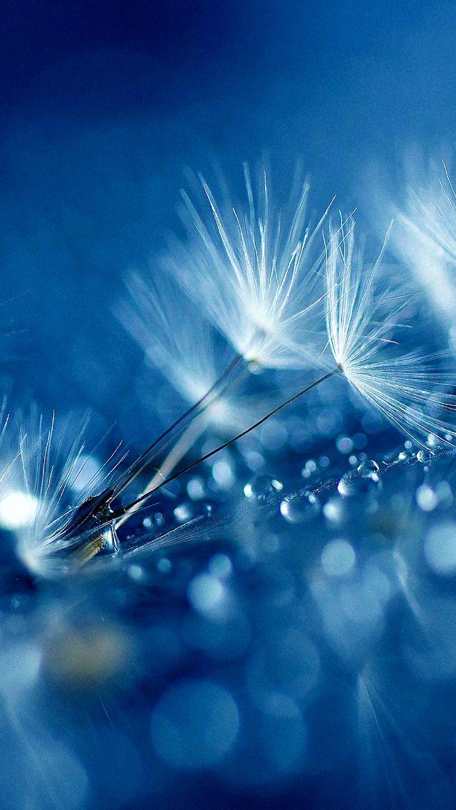 Dandelion - iPhone wallpaper @mobile9 | #nature #macro