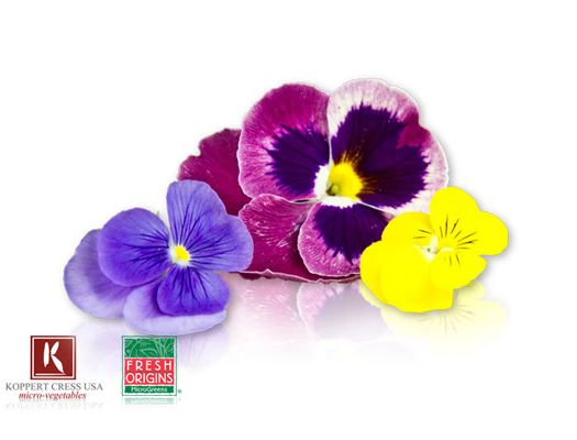 Fresh Pansy Blossoms Edible Flowers Edible Flowers Recipes Flowers For Sale