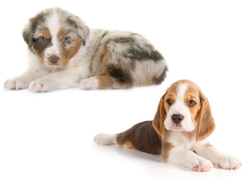 $200 German Shepherd Puppies For Sale Near Me In New Zealand