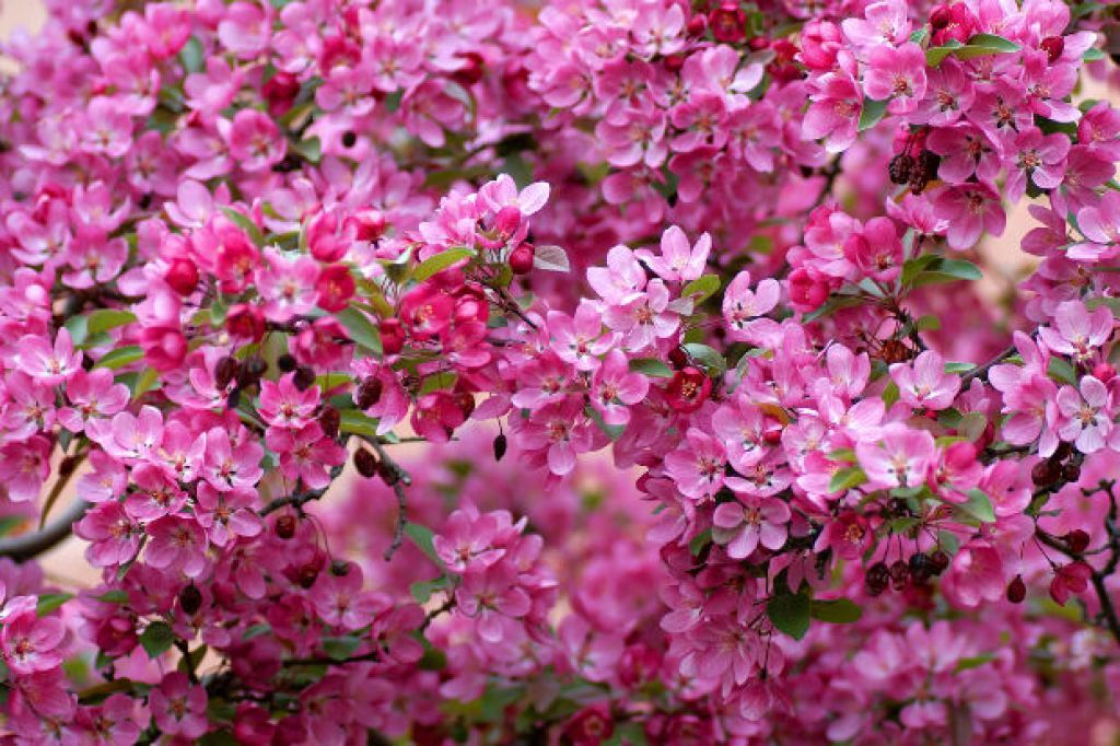 The flowers of the spring season spring pinterest the flowers of the spring season mightylinksfo