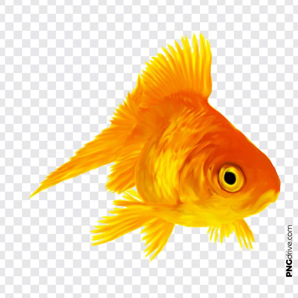 Golden Fish Png Image Golden Fish Png Goldfish