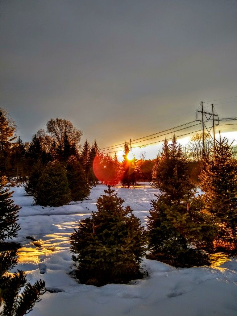 Pin By David Jay Seaton On West Newbury Ma Photography With Images Christmas Tree Farm
