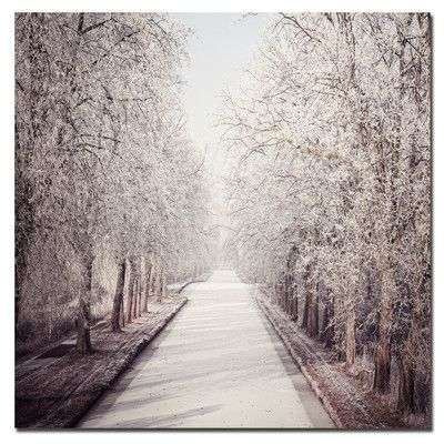 'Milky Way' by Philippe Sainte-Laudy Photographic Print on Canvas   Wayfair