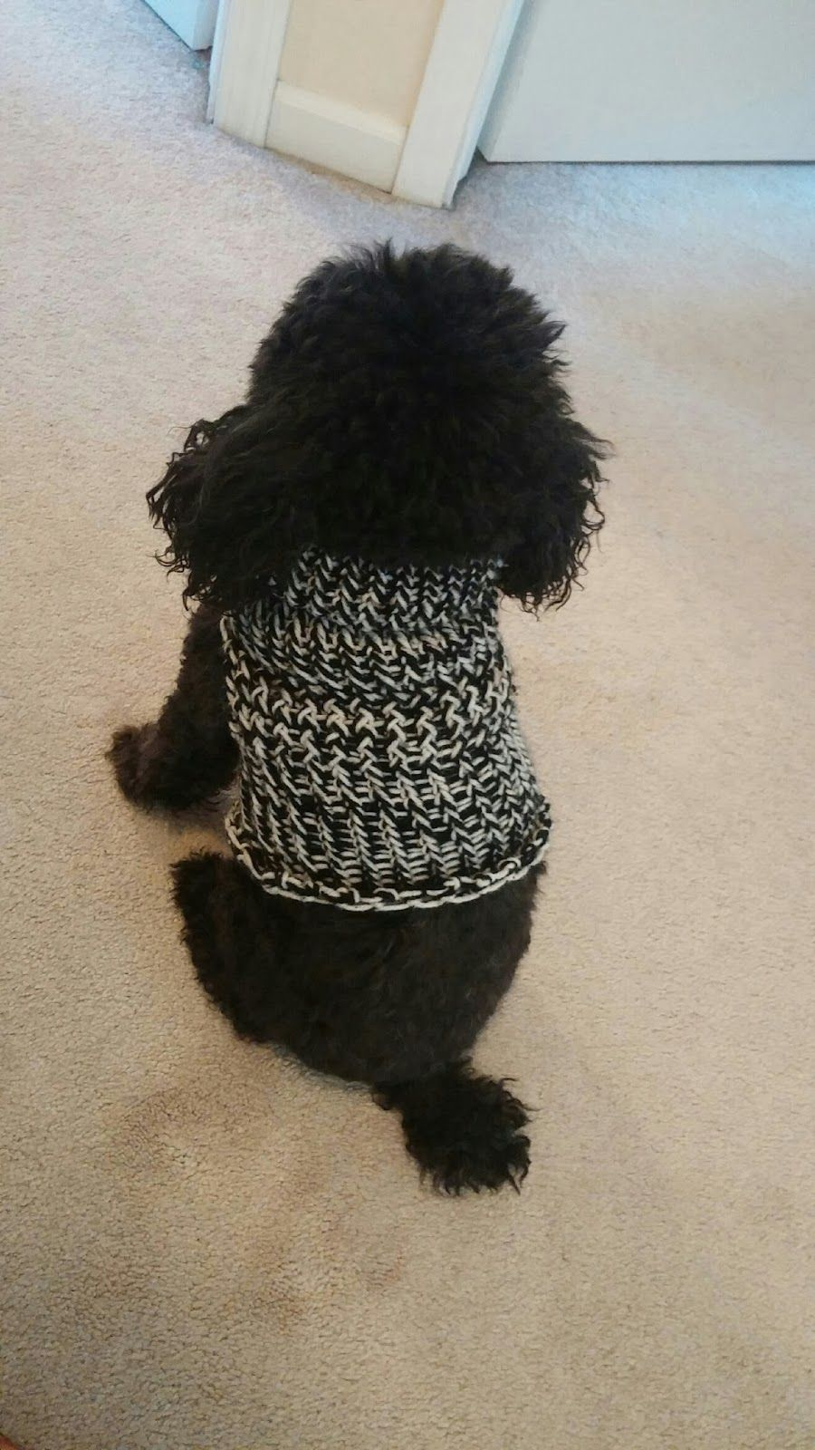 Corky Crafts & Knit Hats: Loom Knitting a Dog Sweater | mine ...