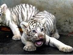 Rare albino animals - Photo 1 - Pictures - CBS News