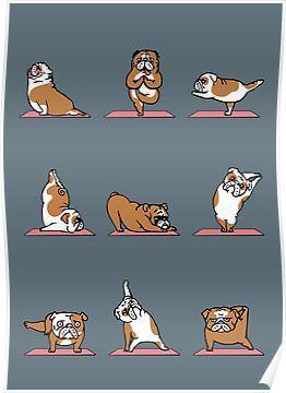English Bulldog Yoga Poster Bulldog breeds, Bulldog