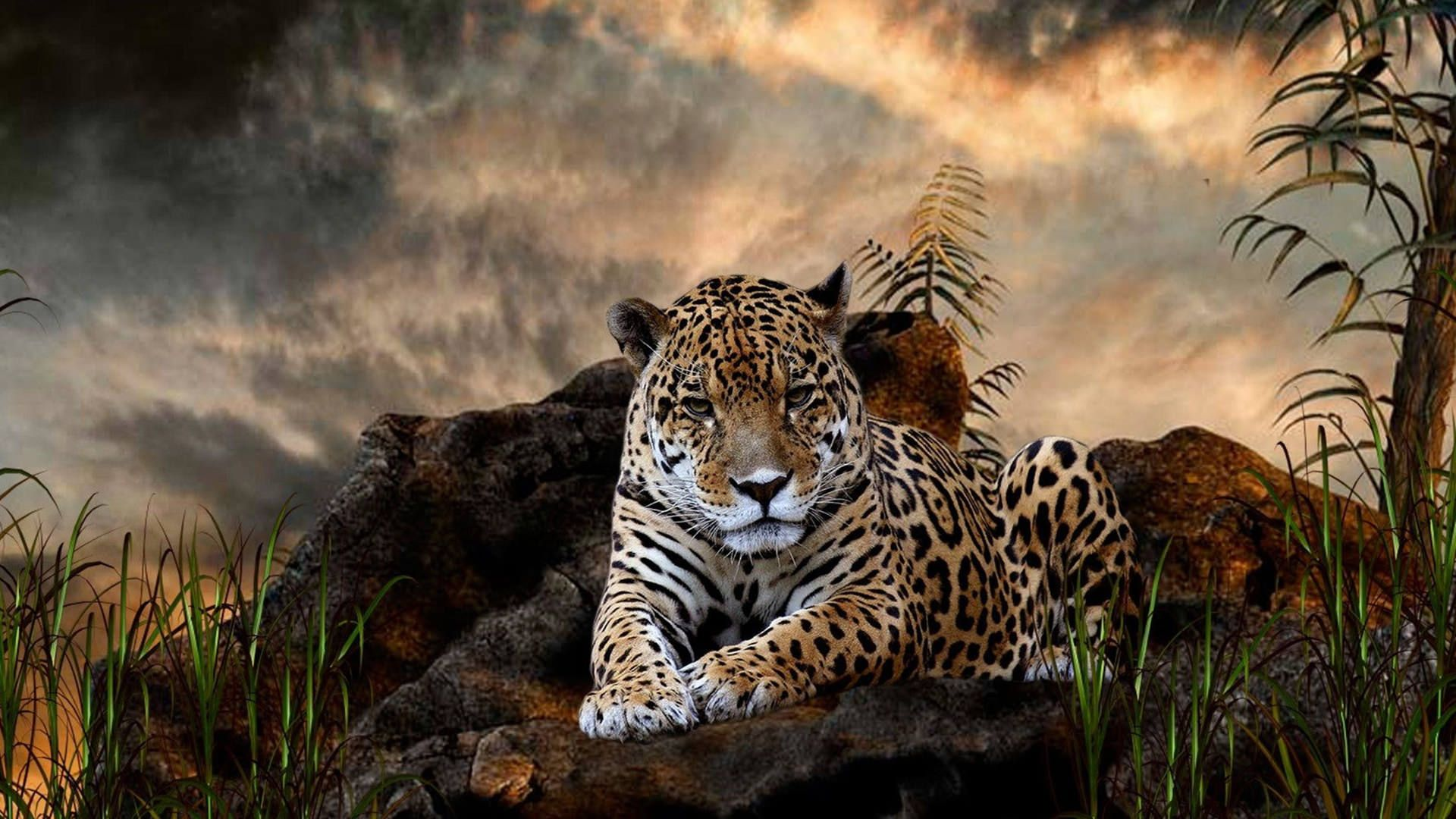 Animals Leopard Wallpapers HD Images Latest Photos Free